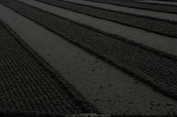 20070208_DSC3096.jpg