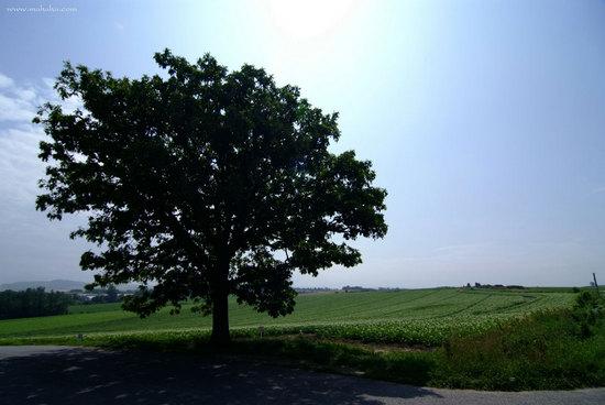 201108_DSF5490_1.jpg