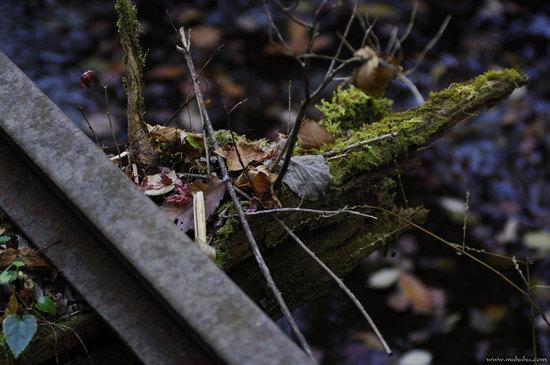 201112_DSC0517.jpg