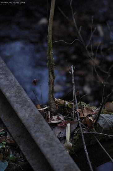 201112_DSC0527.jpg